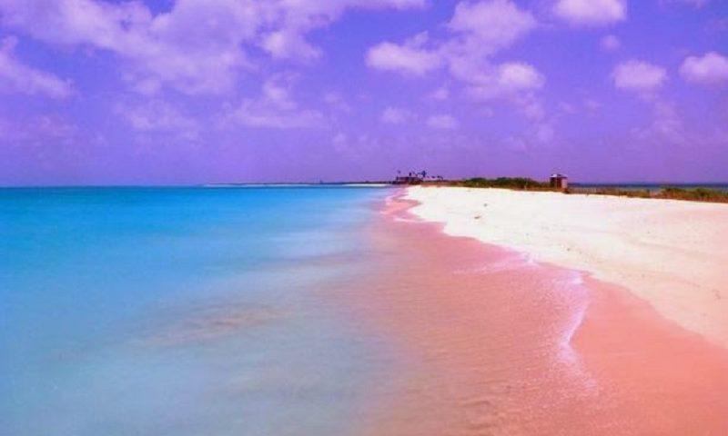 Keindahan Pantai Pink Lombok