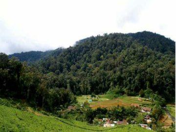 Wisata Anak Taman Nasional Gunung Halimun