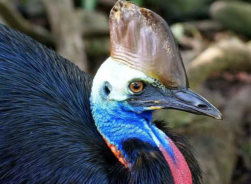 3 Fakta Unik Tentang Burung Khas Papua