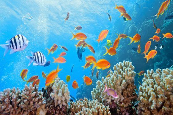wisata laut yang terkenal