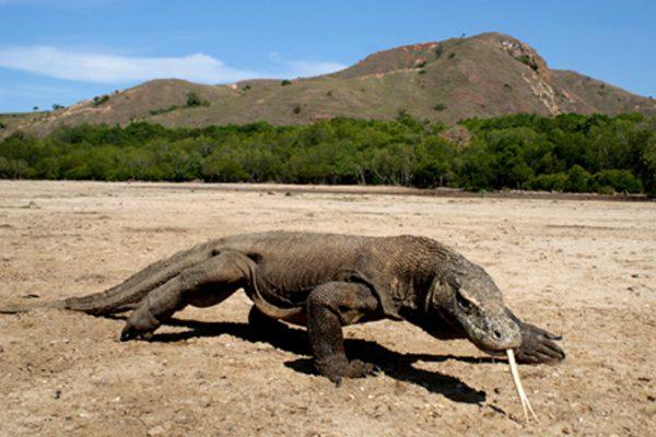 3 Hal Istimewa Dari Pulau Komodo