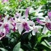 3 Tumbuhan Ini Hanya Ada Di Indonesia