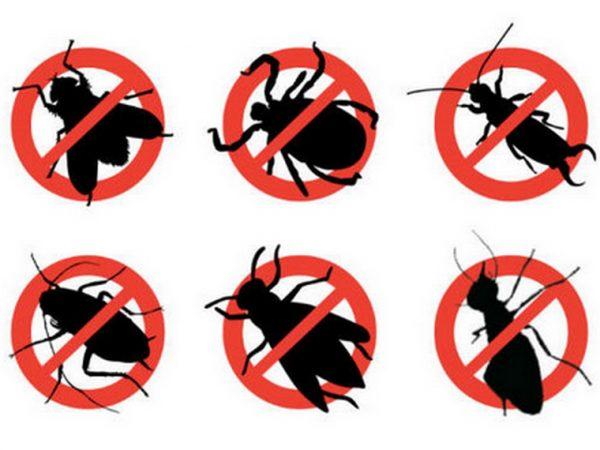 rayap-serangga